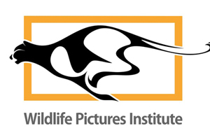 Wildlife Pictures Institute